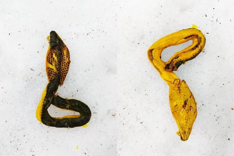 Змею нашли неподалеку от детской площадки. Фото: Инга Иванова.