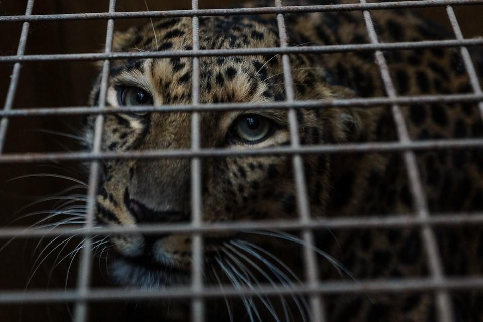 У руководства зоопарка есть время исправить нарушения до начала 2022 года