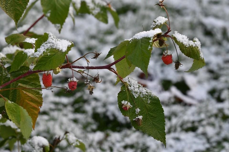 Синоптики предупредили новосибирцев о заморозках до -2 градусов.